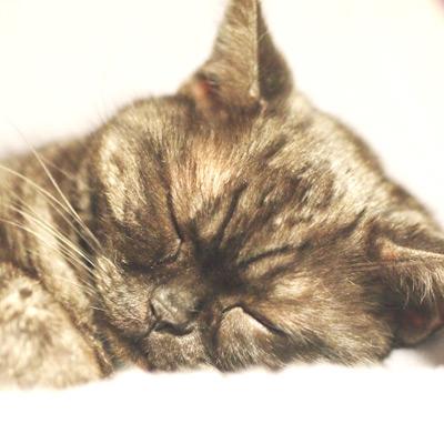 VENEXを着て睡眠の質をライフログで計ってみた。