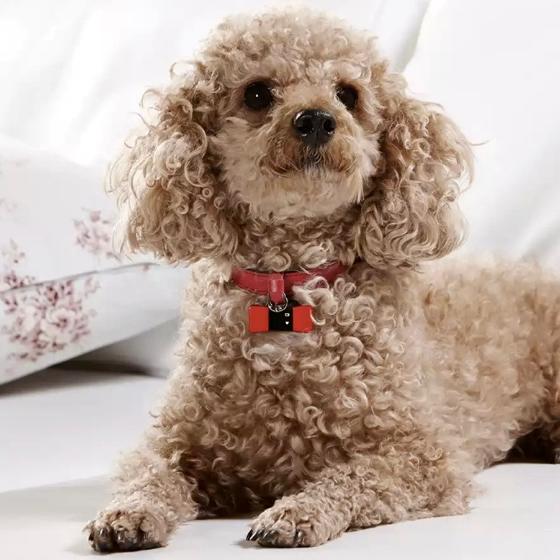 愛犬の運動量がアプリで見られる『ChouPet』がワンダフル!