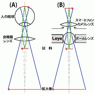 スマホ顕微鏡 Leye エルアイ iPhone 5s/5c/5/4s/4_6