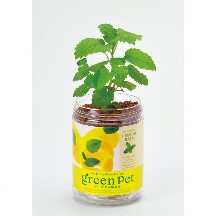 ペットボトルで手軽 育てるグリーンペットハーブ レモンバーム_0