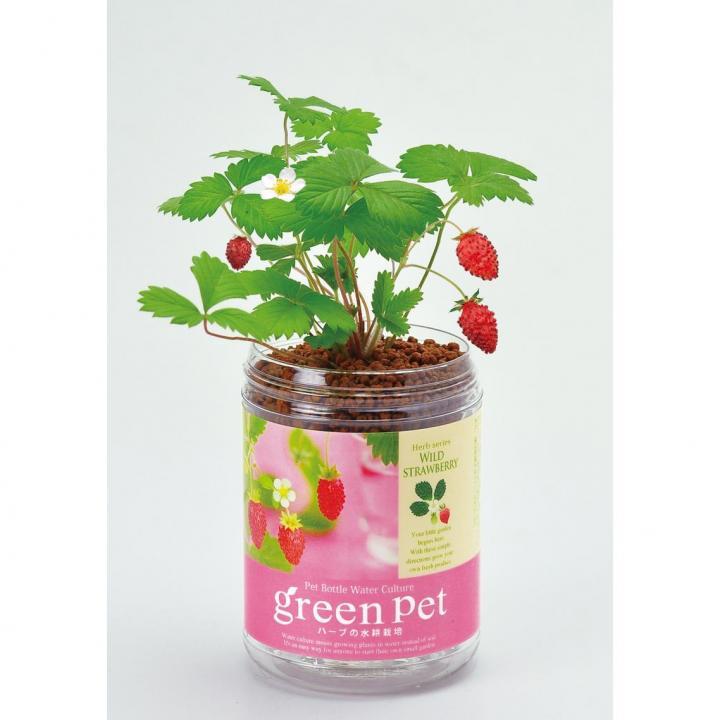 ペットボトルで手軽 育てるグリーンペットハーブ ワイルドストロベリー_0