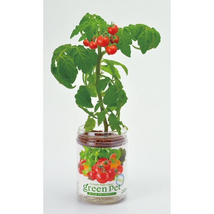 ペットボトルで手軽 育てるグリーンペットベジ ミニトマト