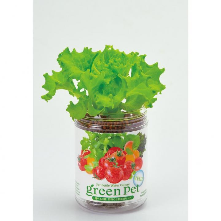 ペットボトルで手軽 育てるグリーンペットベジ レタス_0