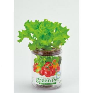 ペットボトルで手軽 育てるグリーンペットベジ レタス
