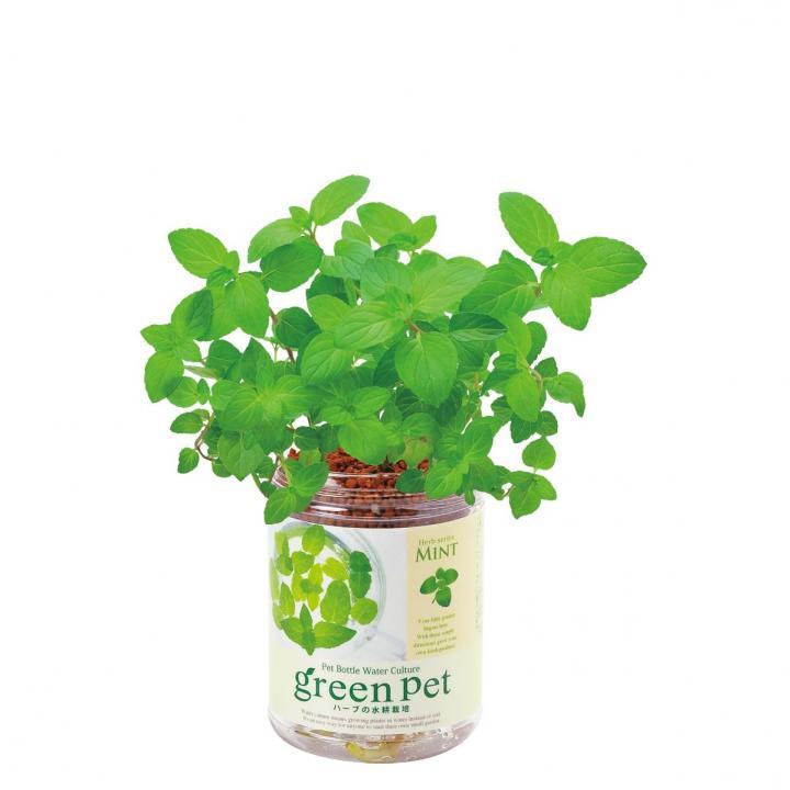 ペットボトルで手軽 育てるグリーンペットハーブ ミント_0