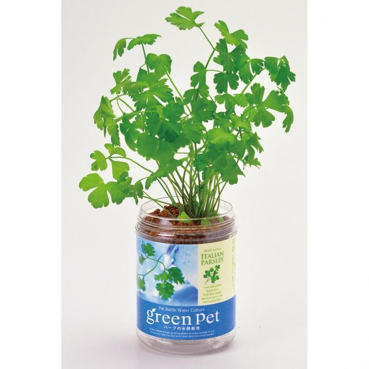 ペットボトルで手軽 育てるグリーンペットハーブ イタリアンパセリ_0