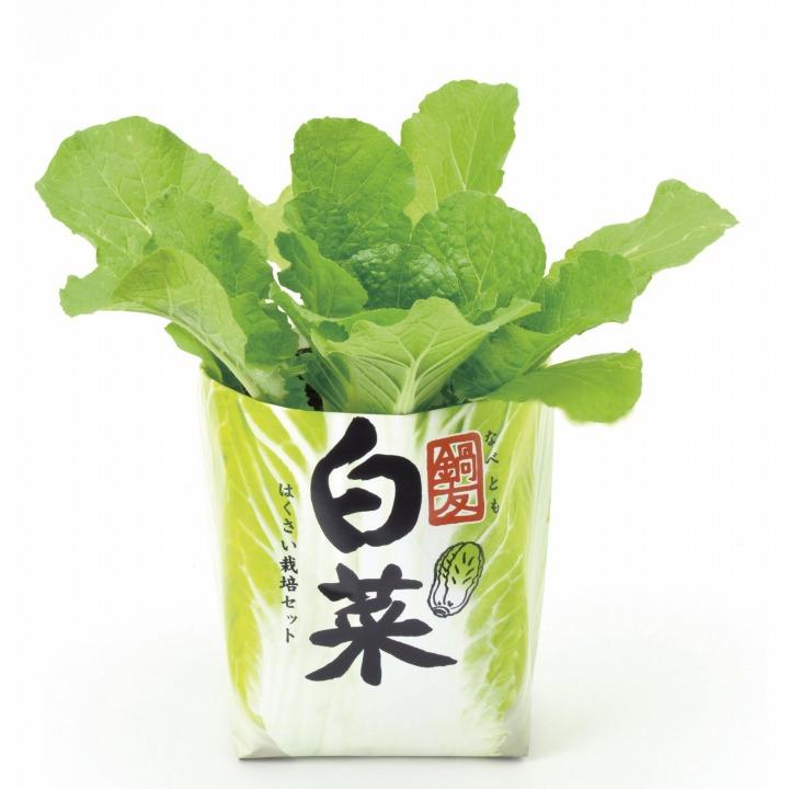 鍋友白菜_0