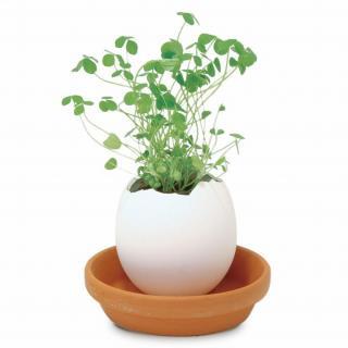 【11月下旬】割って育てる卵型の栽培セット エッグリング クローバー