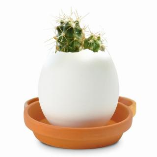 割って育てる卵型の栽培セット エッグリング カクタス