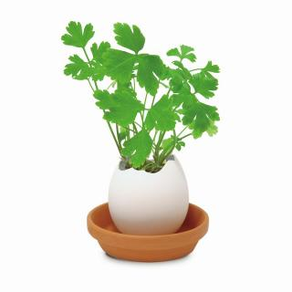 割って育てる卵型の栽培セット エッグリング ハーブ イタリアンパセリ