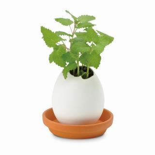 割って育てる卵型の栽培セット エッグリング ハーブ レモンバーム
