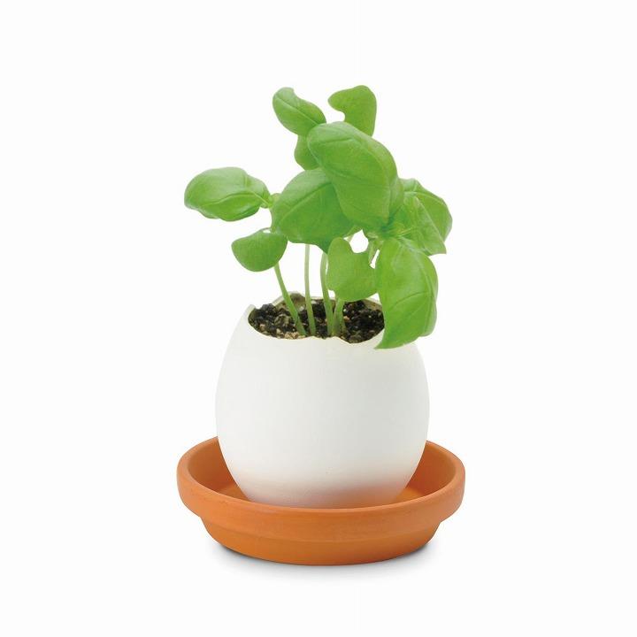 割って育てる卵型の栽培セット エッグリング ハーブ バジル_0