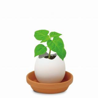 割って育てる卵型の栽培セット エッグリング ハバネロ