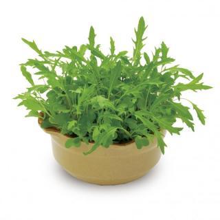 なべ野菜栽培セット 水菜と春菊